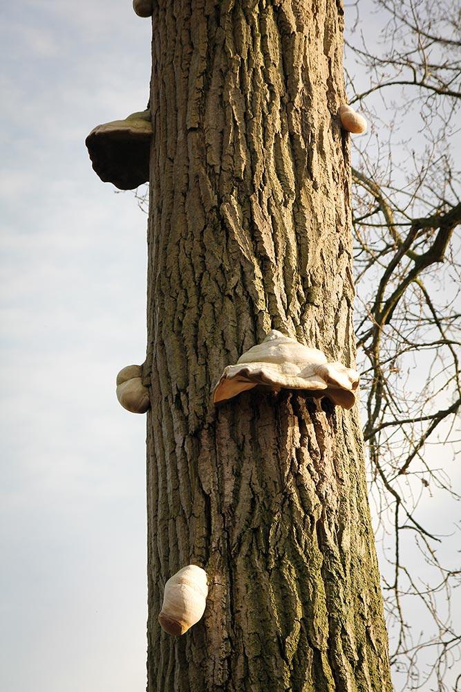 arbres-4351
